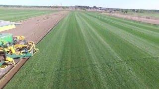 видео рулонные газоны