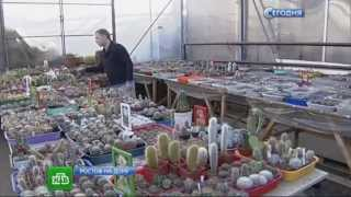 НТВ Инженер из Ростова на Дону собрал самую большую коллекцию кактусов в России