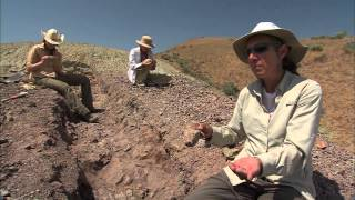 Fifty-five million years ago, a sudden, enormous influx of carbon f...