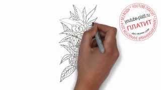 Как нарисовать цветы дикой архидеи карандашом поэтапно(Как нарисовать картинку поэтапно карандашом за короткий промежуток времени. Видео рассказывает о том,..., 2014-07-10T14:26:41.000Z)