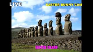 LIVE!!! Easter Bunny Cam - Easter Island