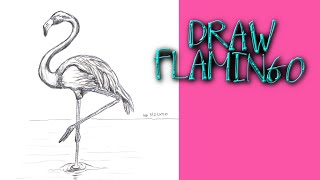 HOW TO DRAW A FLAMINGO BIRD Step by Step Pencil Drawing Tutorial