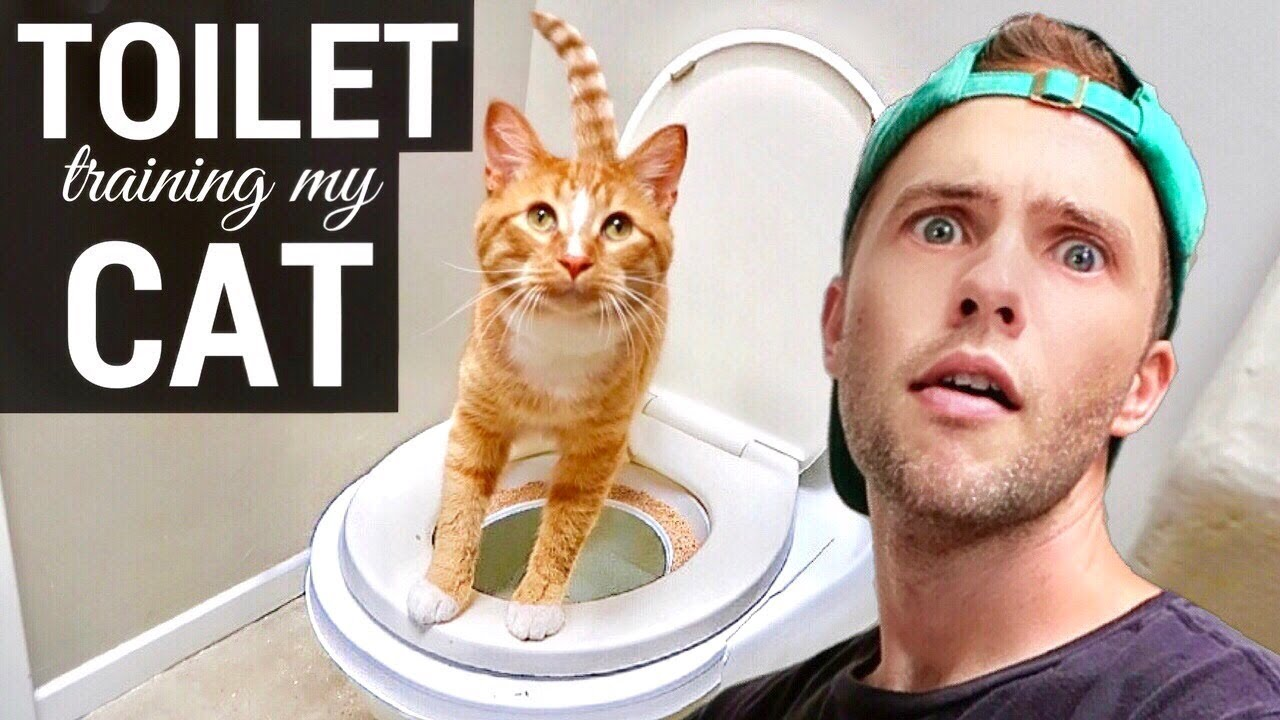 Does Shane Dawson Like Cats Or Dogs