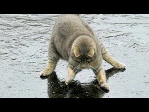 You will LAUGH SO HARD that YOU WILL FAINT  FUNNY CAT compilation