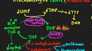 Schneid Guide to Megaloblastic Anemias.mp4