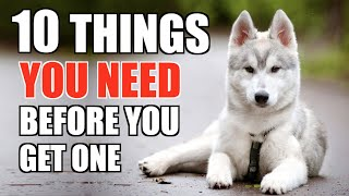 10 Things YOU NEED TO HAVE When You Get A Husky Puppy! [UPDATED GUIDE FOR BEGINNERS]