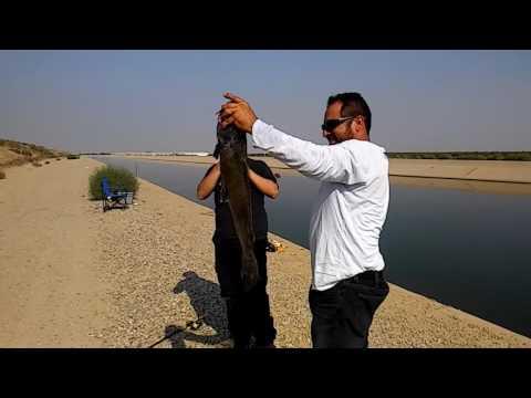 Rigos Giant CA Aqudect Catfish Bakersfield Ca