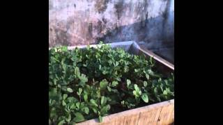 Organic Terrace Farm_Janak.mp4