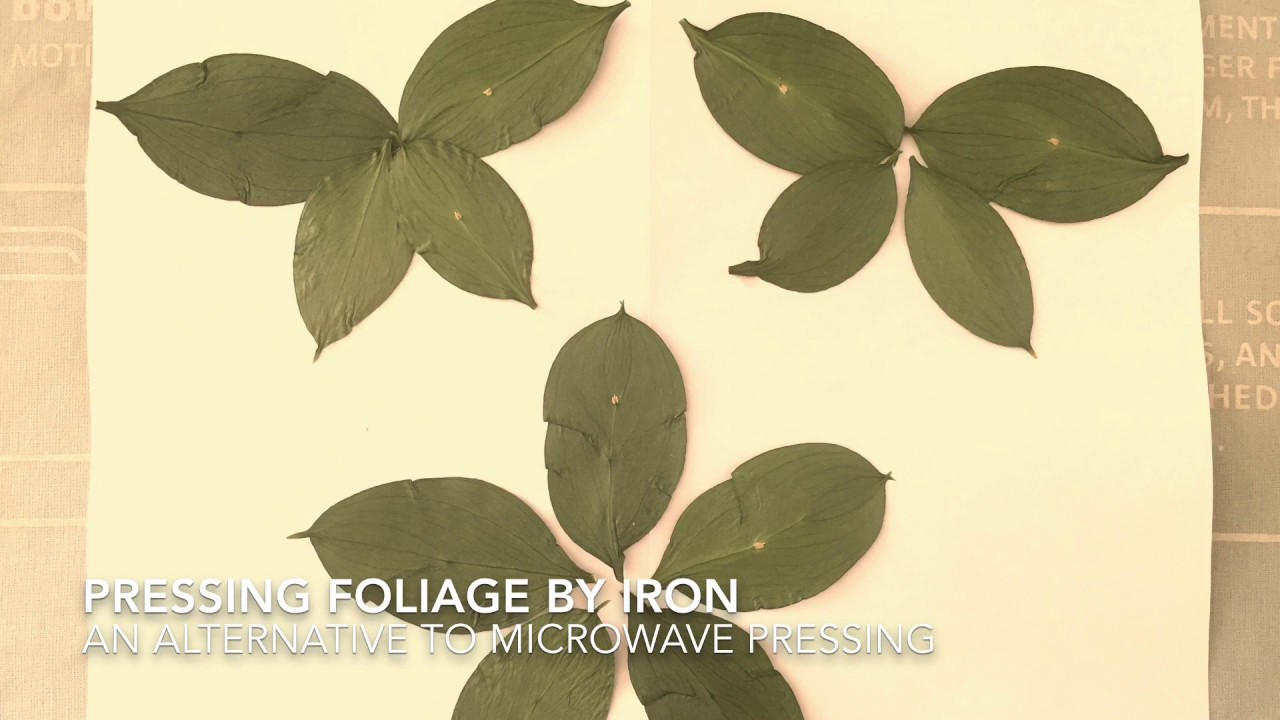 How To Press Leaves Flowers Herbs By Iron Drying Pressing Foliage