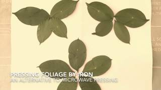 How to Press Leaves Flowers Herbs by Iron | Drying Pressing Foliage Quickly Instantly • by GemFOX