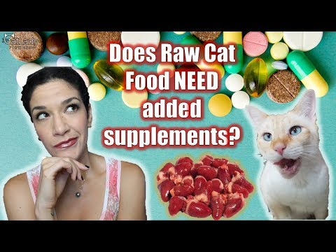 Does Homemade Raw Cat Food NEED Supplements Added? - Caturday Conversations (Cat Lady Chat) 😻