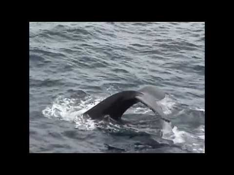 Oceanwide - Antarctic Peninsula : Whale Watching on the Plancius - March 2015