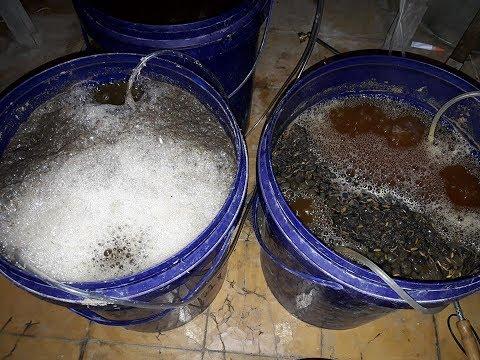 Cara Mudah Membuat Compost Tea dari Kotoran Hewan Sebagai Pupuk Cair Kaya Unsur Hara Lengkap