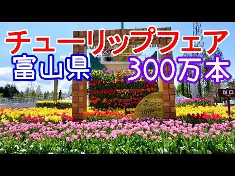 となみチューリップフェア 富山県は砺波チューリップ公園
