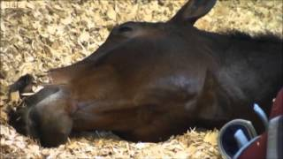 Carl Hester and Charlotte Dujardin on BBC