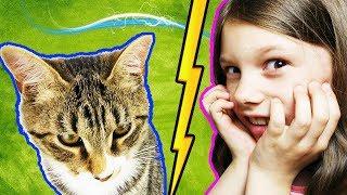 Мой Кот Спас Мне Жизнь 10 Фактов Кот Тигра   Мисс Ариана и Pet Cat