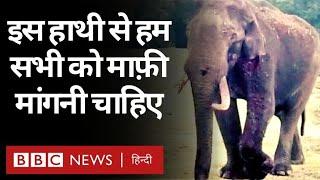 Elephant Death: Tamilnadu में हाथी के ऊपर जलता हुआ टायर फेंकने वाला वीडियो सामने आया (BBC Hindi)
