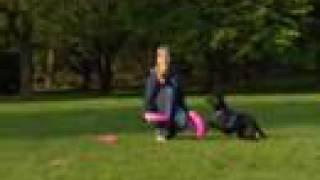 Hundefrisbee - Infos für Anfänger // sky-dogs.de