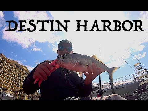 THAT'S WHAT I CAME FOR | Kayak Fishing Destin Harbor