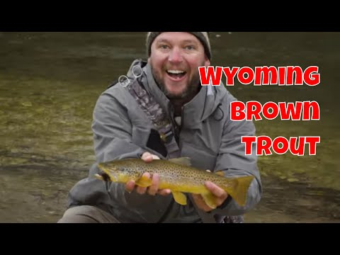 Big Horn Fly Fishing | Wyoming