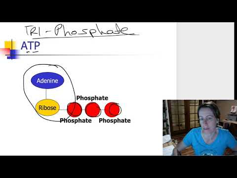 ATP and coupled reactions