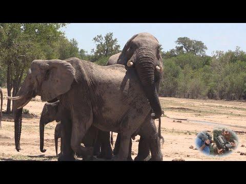 Elephant Loving Games