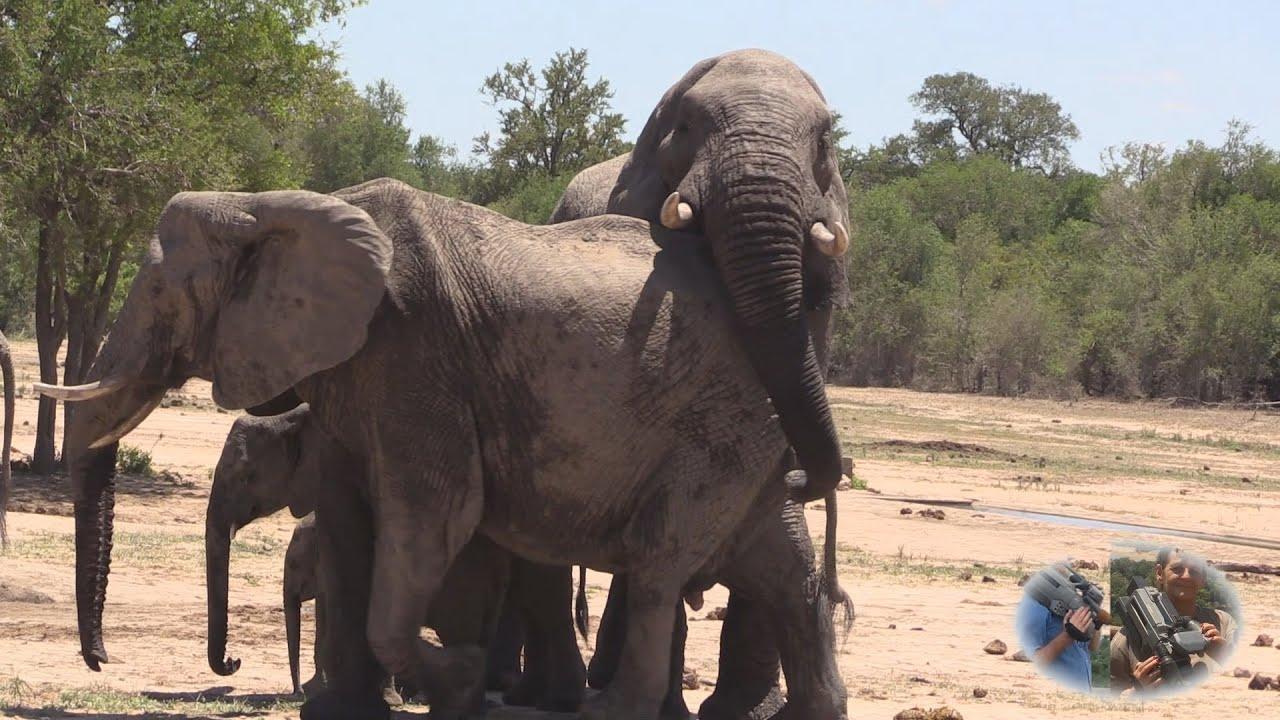 Elephant Loving Games - YouTube Elephant Games