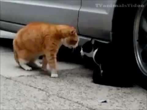Приколы про кошек