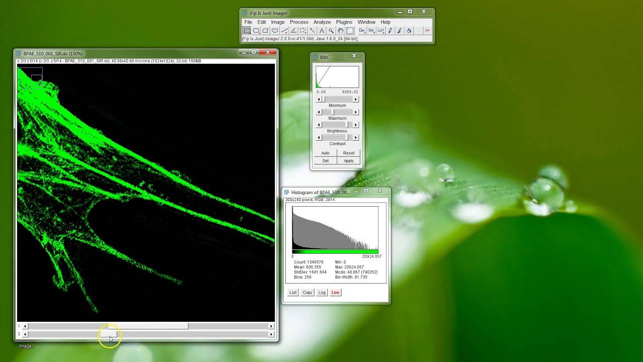 Imagej background - Fiji Is Just Imagej Contrast Adjust Sim Data