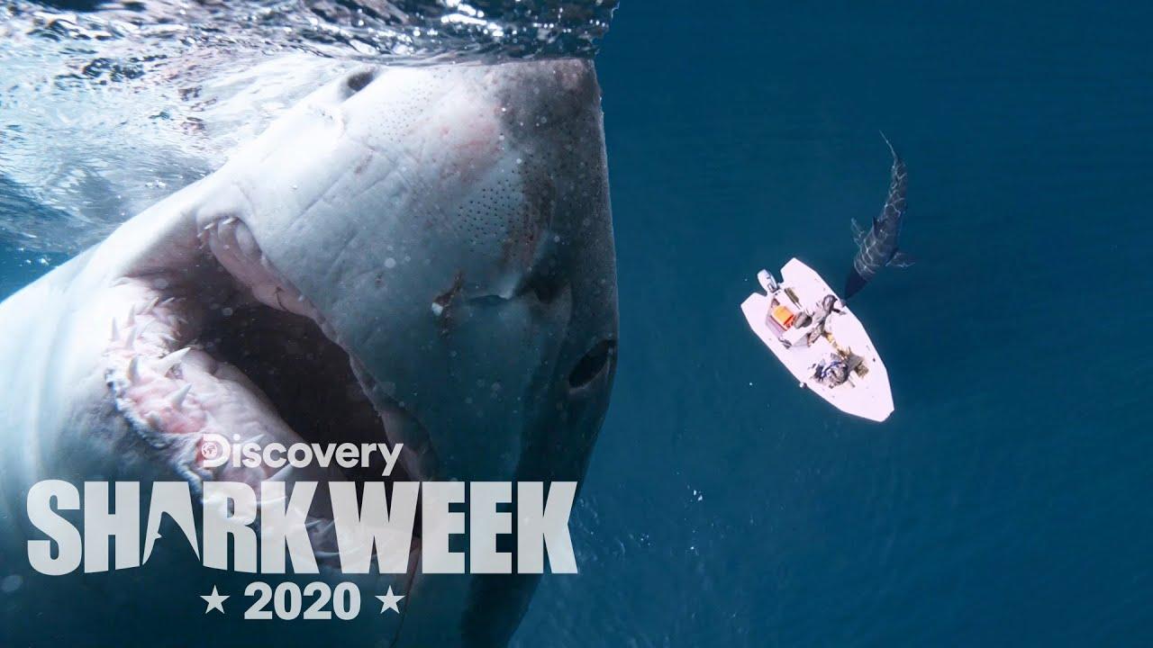 Huge Shark Smacks a Tiny Boat! | Shark Week