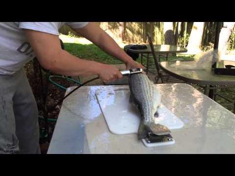 Bear Paw Electric Fish Scaler