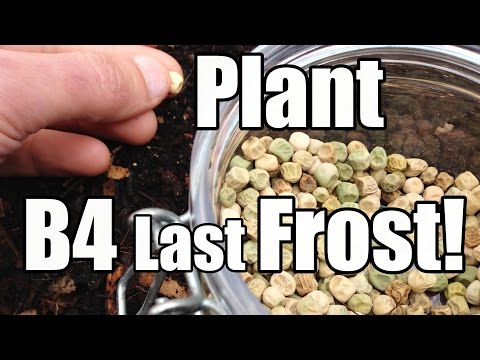 Crops To Plant Outside Before The Last Frost