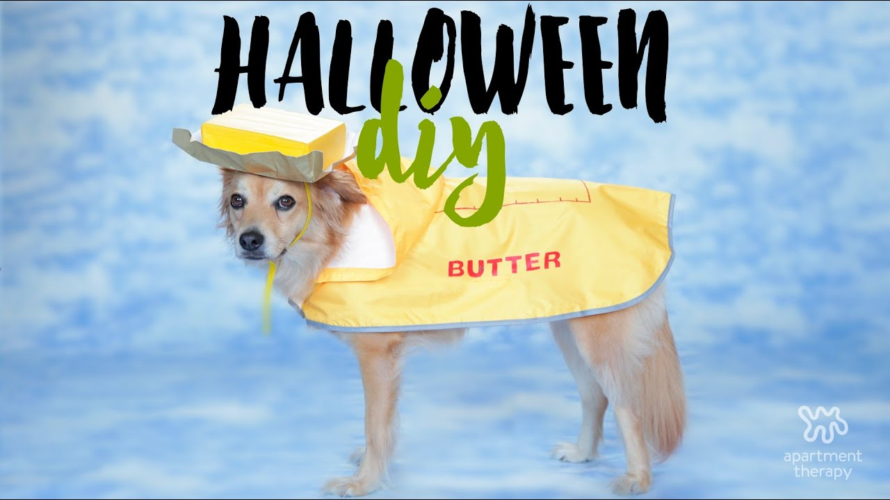 Halloween yourself butter dog costume youtube halloween yourself butter dog costume solutioingenieria Choice Image