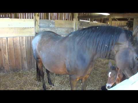 Lady & Foal - Day 1
