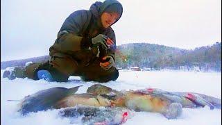 РВЁТСЯ ЛЕСКА НО Я НЕ СДАЮСЬ На рыбалке жарим окуня ловим много упускаем ещё больше