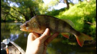 Ловля на спиннинг на малой реке