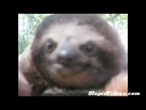 Attack of the Sloth! SCARY! - YouTube