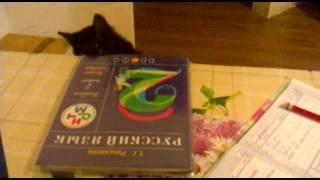 Наша кошка. Помогает делать уроки )))