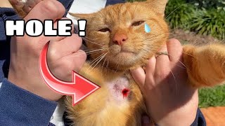 ABANDONED NEIGHBORHOOD CAT FOUND ATTACKED ! WILL HE SURVIVE ?!
