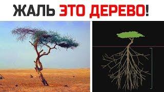Вам станет жалко это дерево. Досмотрите до конца