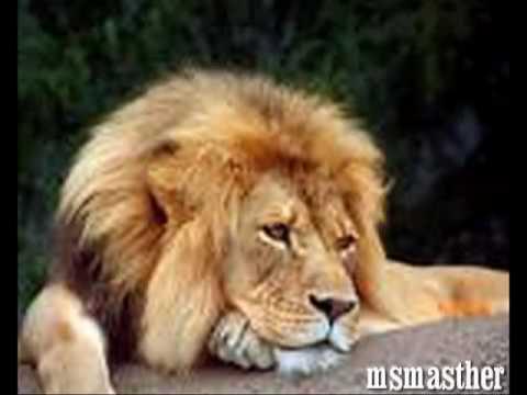 one hit wonders-the lion sleeps tonight,