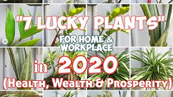 7 Lucky Plants for Home & Workplace in 2020 (Health, Wealth & Prosperity)