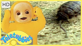 ★ Teletubbies English Episodes ★  Woodlice ★ Full Episode - HD (S08 E201)