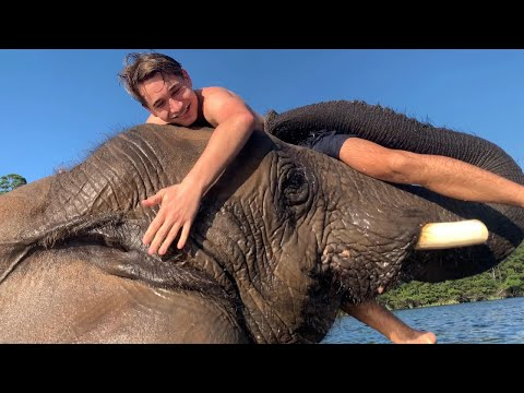 I WENT SWIMMING With An ELEPHANT !