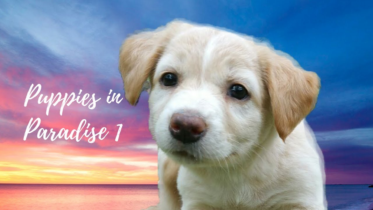 Download Puppies in Paradise - 1