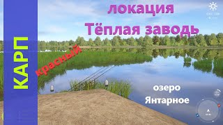 Русская рыбалка 4 - озеро Янтарное - Карп цветной с песчаного мыса