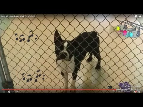Dog Adoption Room Walk Thru 7-8-17