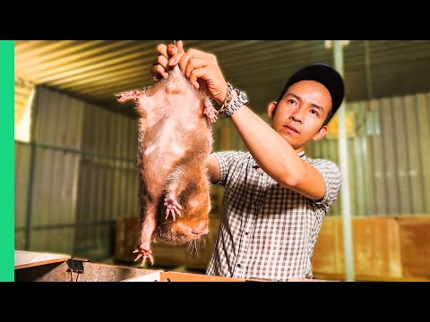 Vietnamese SUPER RATS for Dinner!!! Asia's Pandemic Proof Food!! | Surviving Vietnam Part 2