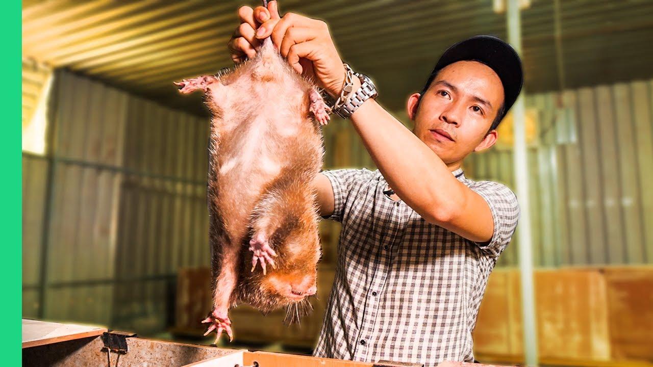 Vietnamese SUPER RATS for Dinner!!! Asia's Pandemic Proof Food!! | Surviving Vietnam Part 2