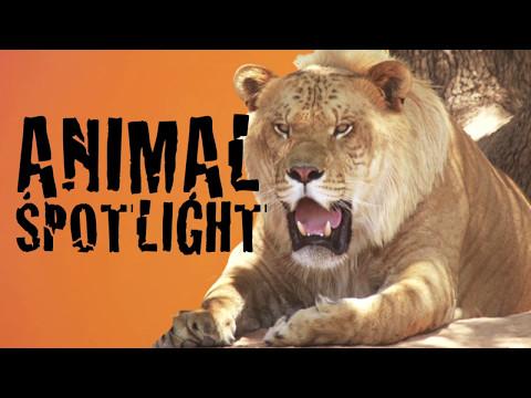 fisher cat animal spotlight